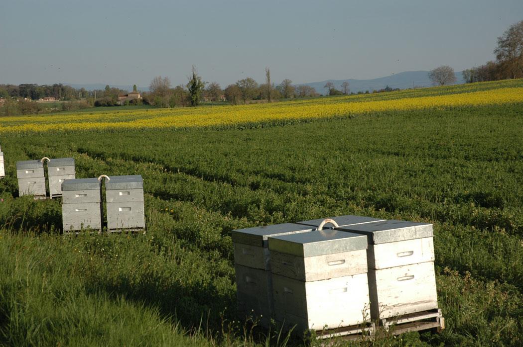 Site de rencontre entre agriculteurs