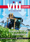 Viti Leaders