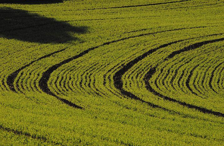 Céréales à paille :Arvalis sort une nouvelle grille de fertilisation soufrée. ©Pixel image