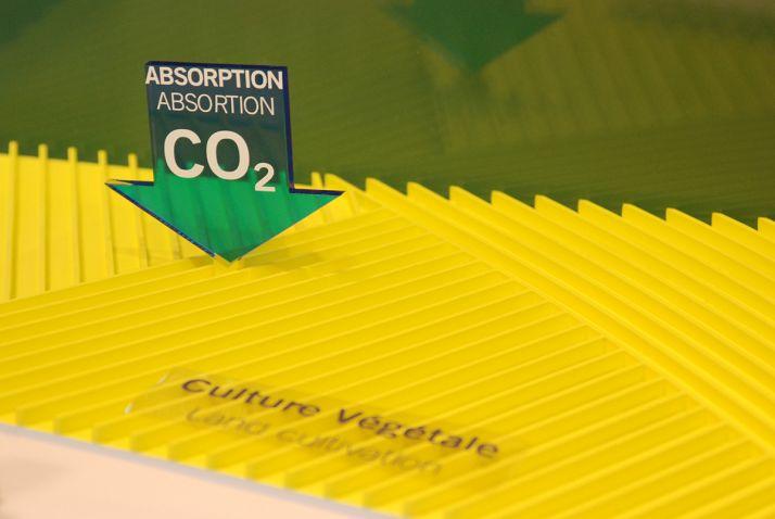 Toutes les plantes et toutes les variétés de sont pas égales face à l'augmentation de la teneur en CO2 de l'atmosphère.