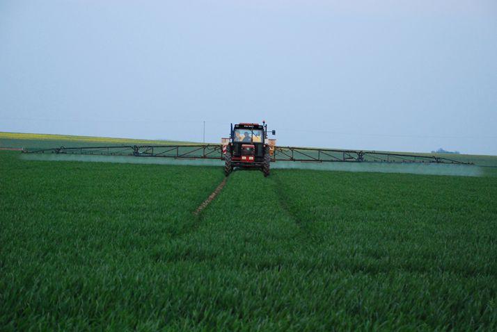 Le biocontrôle doit se contenter du T1 pour l'instant lorsqu'il est nécessaire sur blé. Photo : Pixel6TM