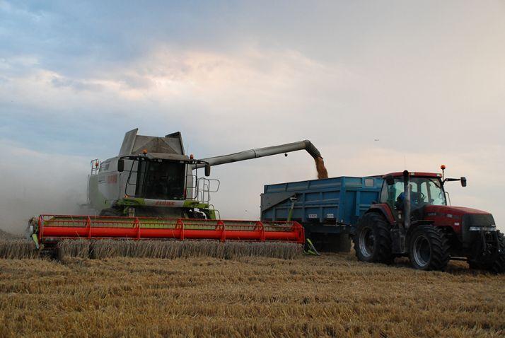 Le rendementdes blés décrochefortement dans l'Ouest de la France.
