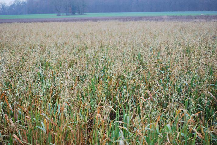 Quelles que soient les espèces implantées, le couvert végétal offre toujours un avantage quant à l'infiltration de l'eau.