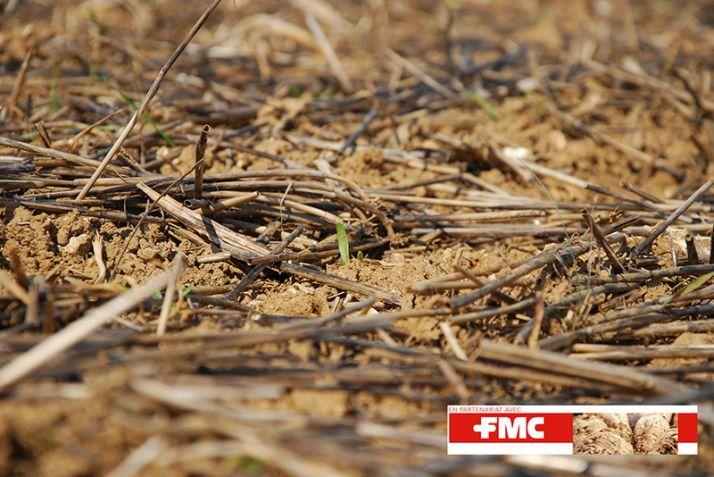 La quantité importante de résidus en surface empêche d'atteindre toutes les adventices quand elles sont au stade point vert. Pour cette raison, le Gaec Bollaert retarde le premier herbicide.