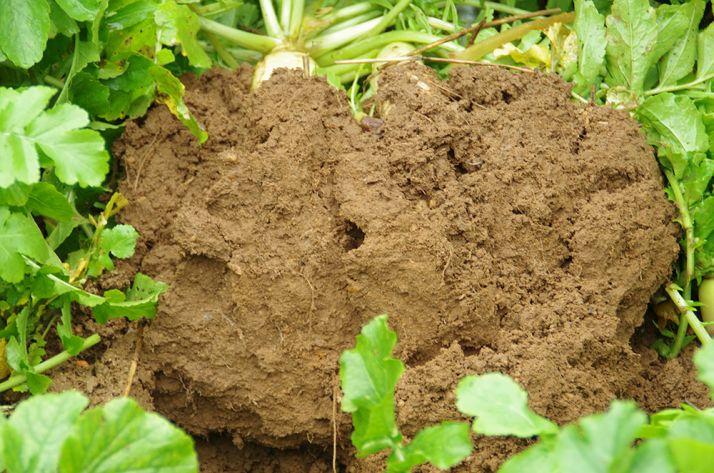 Le type de sol est un des facteur essentiel influençant la capacité du sol à stocker du carbone.
