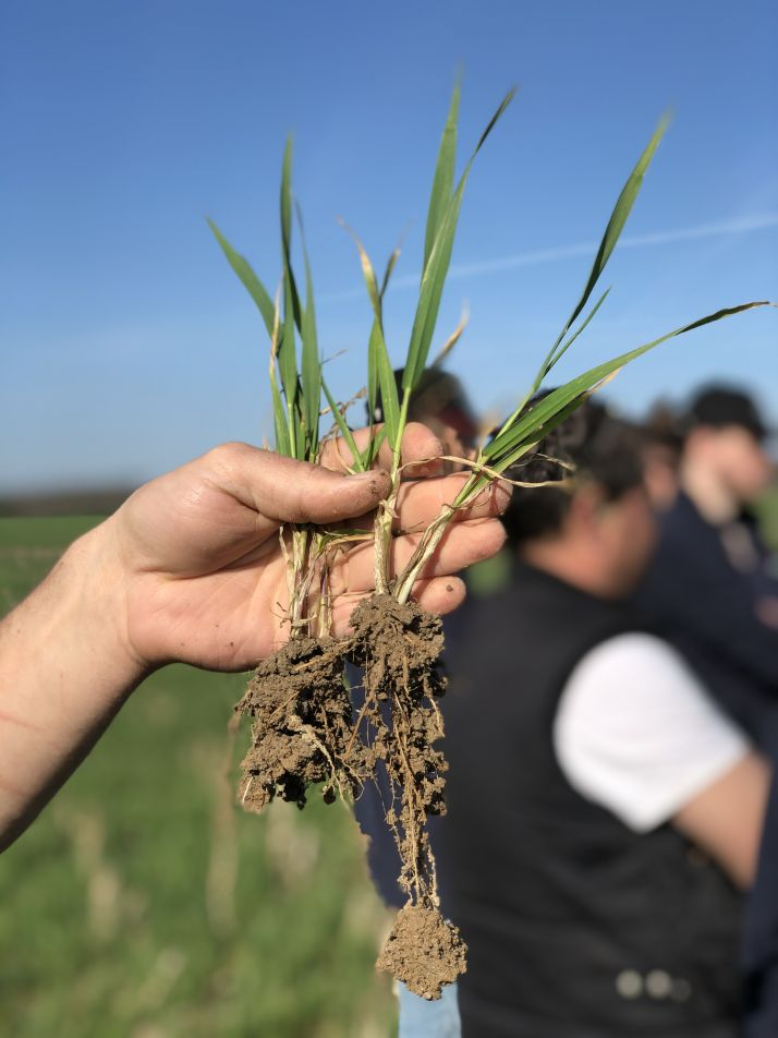 Une plante bien nourrie favorise un sol sain et vice versa, un sol sain favorise une bonne nutrition des plantes. Photo : Agroleague