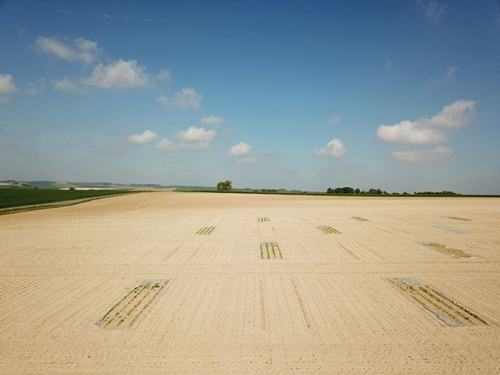 La différence de développement entre un semis classique et un semis sous bâche à la même date est flagrante! En un mois, le différentiel de température cumulée a atteint  200°C en 2018.