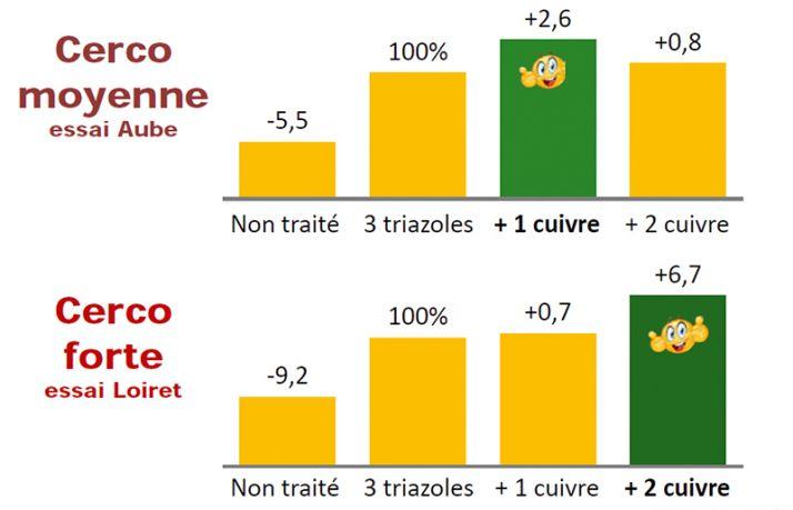 Malgré son coût plutôt élevé, le cuivre semble être un fongicide efficace contre la cercosporiose. Faut-il encore adopter la meilleure stratégie en fonction de la pression de la maladie.