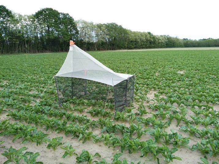 La tente Malaise a été validée comme le moyen le plus efficace d'observer l'arrivée et la présence de «Lixus juncii» sur un secteur.