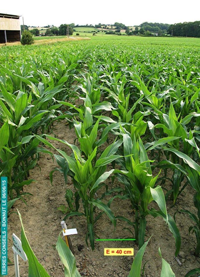 Mieux r partir pour mieux prospecter le sol cultivar for Conseil sur les plantes
