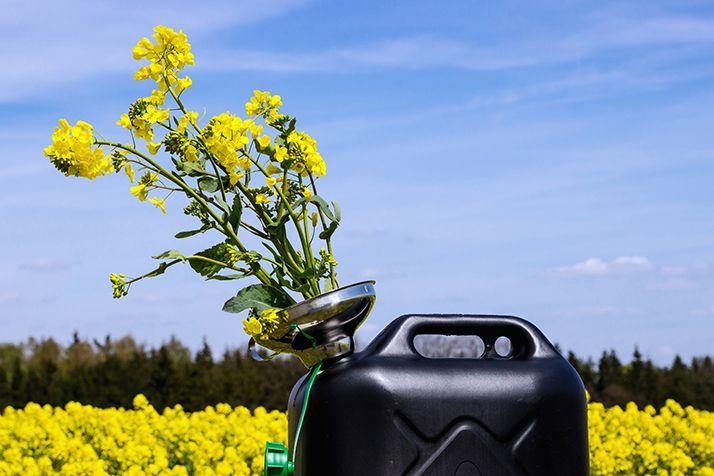 OleoZE, pour gagner jusqu'à 40 euros de plus par tonne de colza. © Opticaltech/Adobe Stock