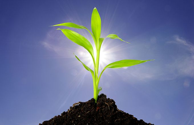 Revitalisation des sols. Photo : Daylight Photo/Adobe Stock