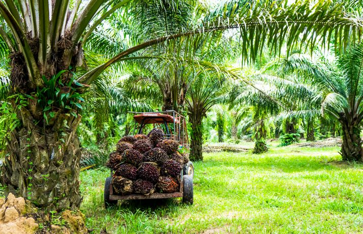 Dans son rapport mensuel, la FAO indique qu'en décembre 2019, l'indice des prix des produits alimentaires a atteint sa valeur la plus haute depuis cinq ans. La plus forte hausse est a imputer aux huiles végétales, huile de palme en tête.