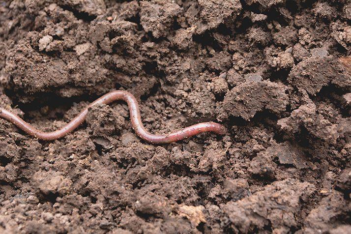 Ingénieurs du sol et de sa vie biologique. ©Krisana/Adobe stock