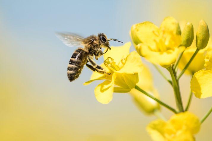 Proteger les cultures, les auxiliaires et les pollinisateurs.