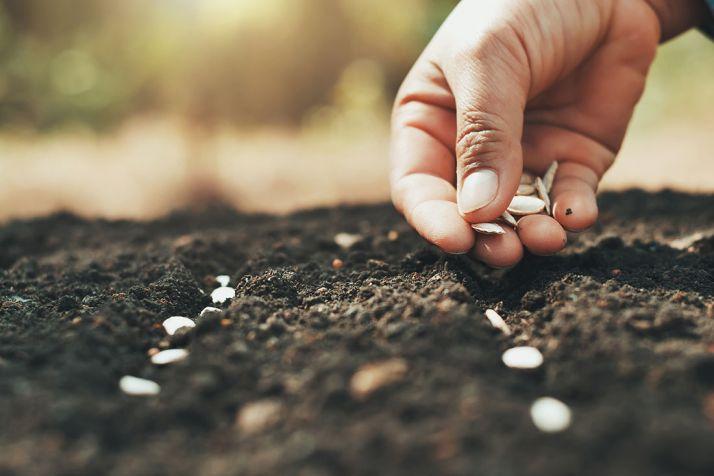 """Dans une déclaration commune publiée le 16 mars 2021, les acteurs mondiaux de secteur privé des semences réitèrent """"leur engagement à promouvoir des systèmes alimentaires durables, abordables, sûrs et nutritifs"""". Photo : lovelyday12"""