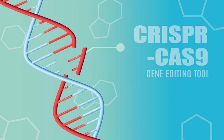 Vilmorin & cie va déployer la technologie Crispr-Cas9 pour ses activités de semences.