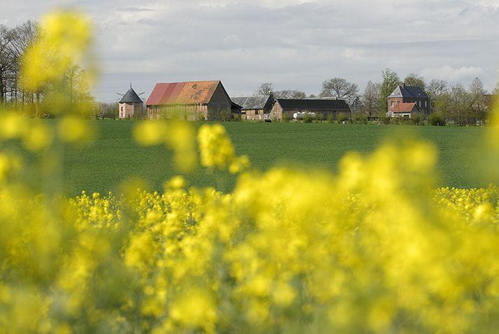 La production européenne fortement pénalisée par les conditions météo (USDA). © Photoagriculture/Adobe Stock