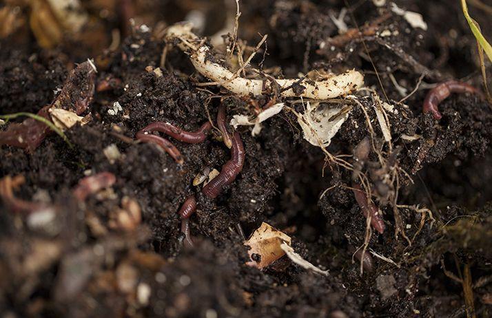 La limitation des agressions mécaniques et surtout la couverture du sol, avec des couverts diversifiés et permanents, suffisent à améliorer rapidement la biologie du sol. ©jbphotographylt/Adobe Stock