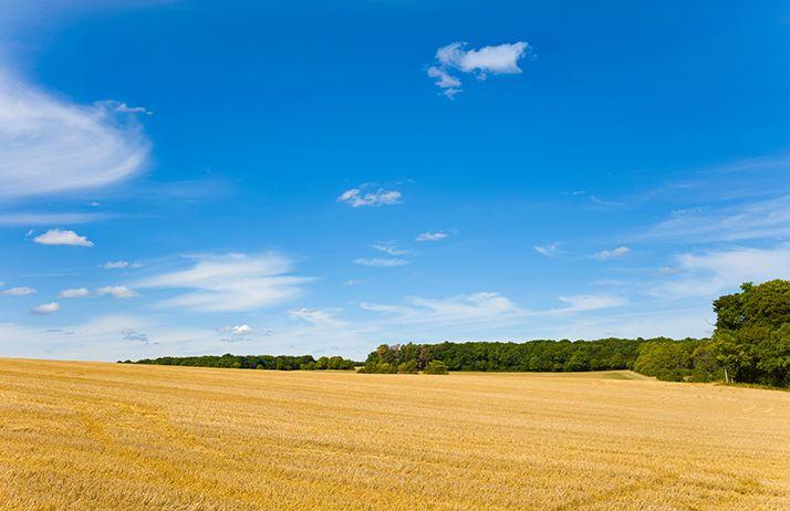 L'AGPB demande un plan d'urgence pour les céréaliers. © Florent/Adobe Stock