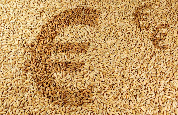 Répercuter la hausse du blé sur les produits finis. © Elypse/Adobe Stock