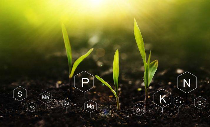 Des biostimulants au moment de la fertilisation pour gagner en flexibilité et en productivité.