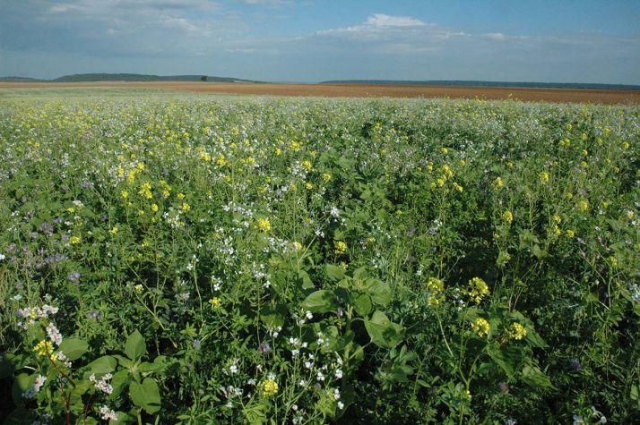 Bayer CropScience lance se lance sur le marché du carbone en emmenant 27 agriculteurs européens pour tester les pratiques favorables à la décarbonation des activités agricoles.