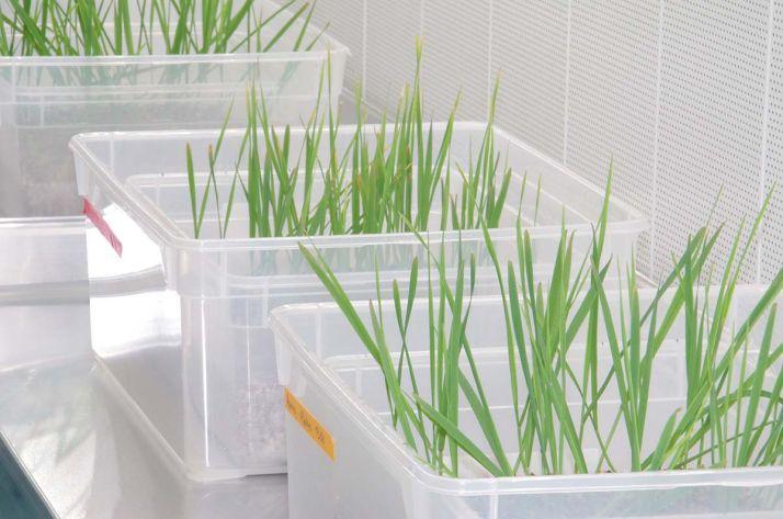 Le nombre d'innovations de biocontrôle arrivant prochainement en grandes cultures devrait participer à en accroitre les parts de marché.