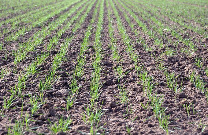 L'agronomie est la seule façon à moyen terme de contrer les résistances. A.Lambert/Pixel Image