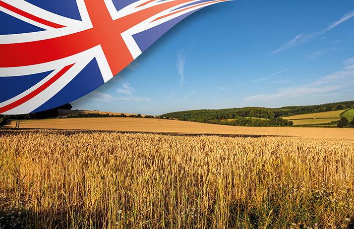 Le Royaume-Uni doit faire face à sa pire récolte depuis 40 ans. ©JwlOwenet Butenkow/Adobe Stock