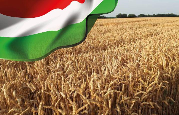 Cultiver le blé hybride - Hongrie