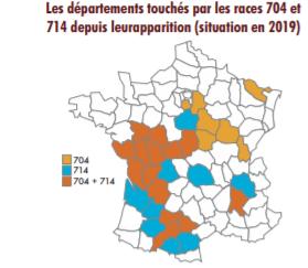 Une trentaine de départements sont touchés par l'un ou l'autre ou les deux des races du mildiou du tournesol 704 et 714.