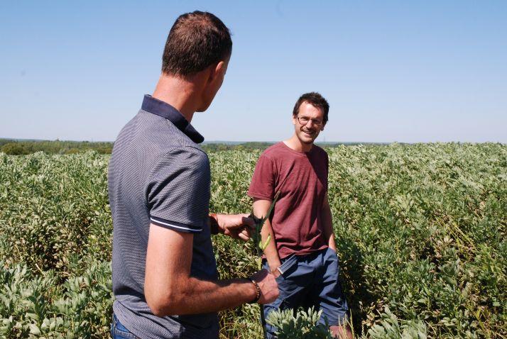 Pierre Fichet, céréalier à Fontivillié, cultive 9 hectares de féverole en 2020. © O.Lévêque/Pixel6TM