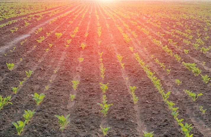 Sucre : une production mondiale légèrement excédentaire.© Perytskyy/Fotolia