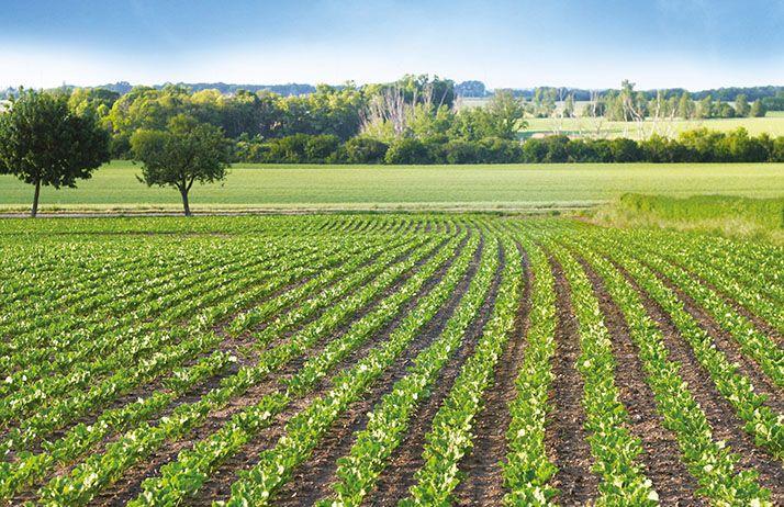 La technologie du semoir bi-varietal de betterave devrait être testée par Tereos au printemps. © Annett Seidler/fotolia
