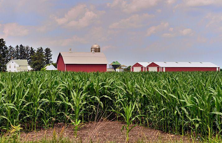 USA : le lobby du biocarburant au créneau.© Bruce_Fotolia
