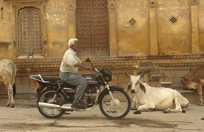 Les extrémistes traquent les mangeurs de  viande. © Production Perig/Fotolia