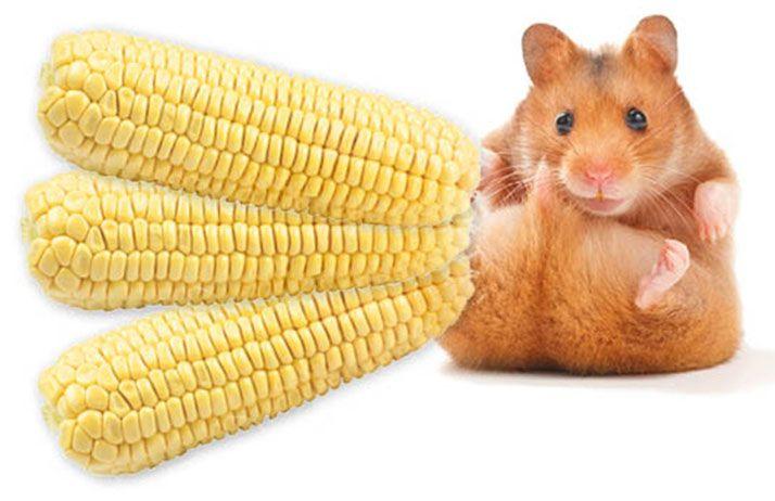 Manger trop de maïs peut rendre fou ! © Subbotina Anna et ALF photo/Fotolia