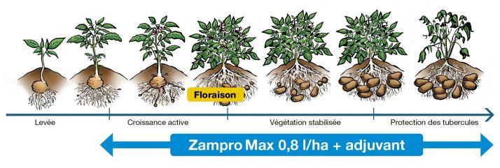 illustration-periode-application-zampromax.jpg