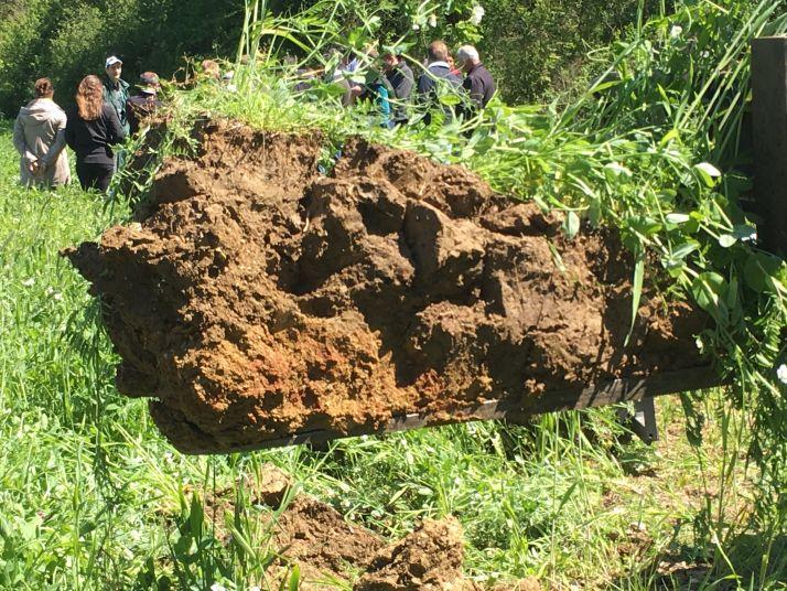 Les racines sont capables de coloniser le sol en profondeur à condition que la durée de végétation soit suffisamment longue. Photo : Mathieu LECOURTIER/Média&Agriculture