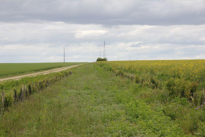 Selon la parcelle, le territoire et la région, les services de contrôle biologique rendus par les ennemis naturels des bioagresseurs fluctuent. Crédit : J. Sandri