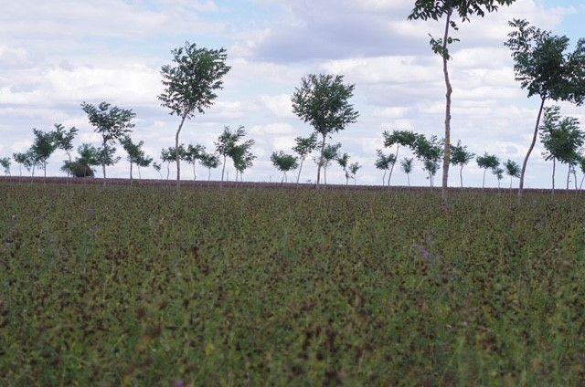 Toute végétation en croissance est un puit de carbone en puissance. Il ne faut d'ailleurs pas confondre stock avec variation de stock... Crédit Photo : Christophe Frébourg