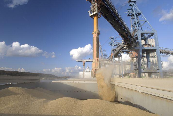 Le blé tendre français devrait trouver de bons débouchés à l'export.