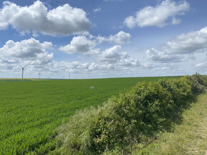 """Pour compenser la mise en place d'éoliennes, Engie Green continue la mise en place """"d'équivalences écologiques"""", notamment dans la région Champagne-Ardenne."""