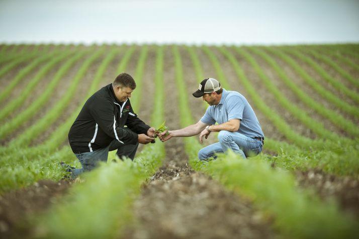 Avec Sem'Expert Dry, Corteva souhaite accompagner les agriculteurs afin d'introduire ou de réintroduire du maïs grain de façon rentable dans les rotations courtes et dans des parcelles à bas ou moyen potentiel en système non irrigué.
