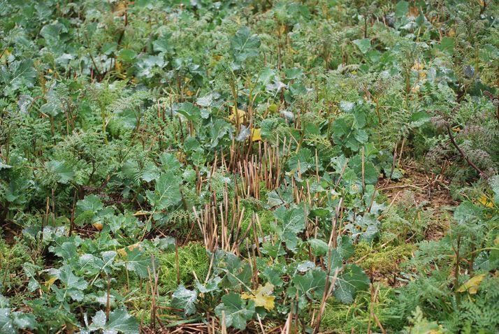 La pratique des plantes compagnes se développe en France, mais encore faut-il trouver la bonne association pour ne pas être déçu !