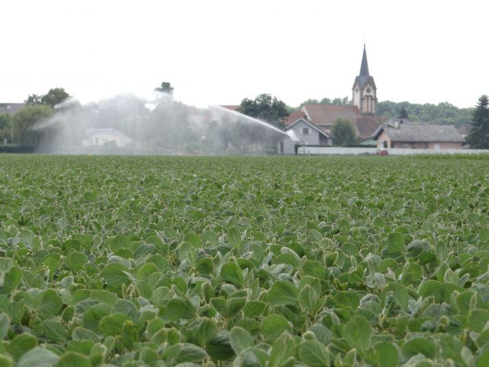 L'arrêt de l'irrigation du soja doit se faire à l'apparition des premières gousses virant au brun (stade R7), au plus tard trois semaines avant la récolte. Photo : Aurore Baillet