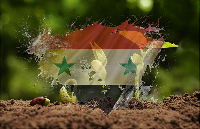 Des collections de semences menacées par le conflit syrien. © Argus et Singkham/Fotolia