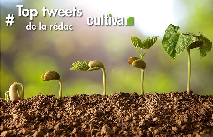 top_tweets_cultivar.jpg