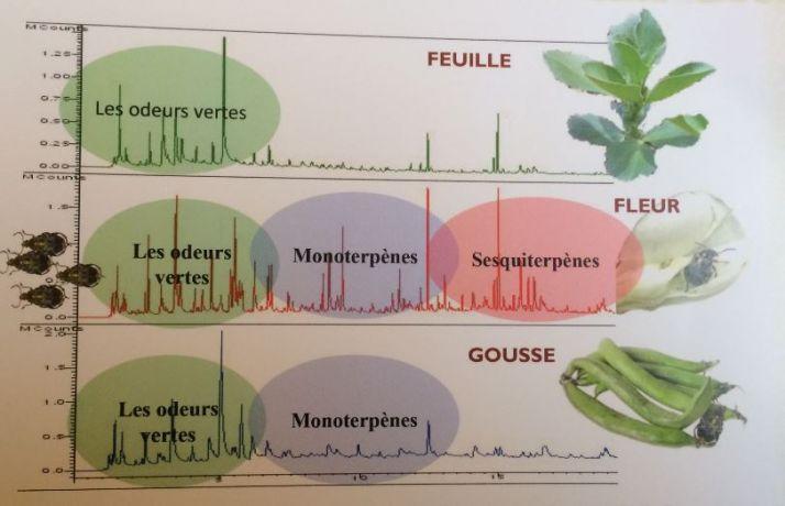 Les solutions de biocontr le l preuve du champ cultivar - Composes organiques volatils ...